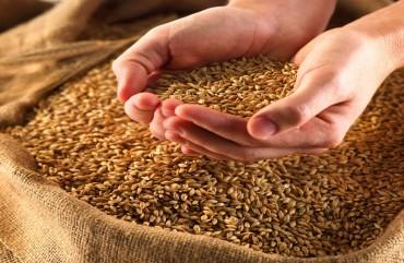 Feed barley Grade 2